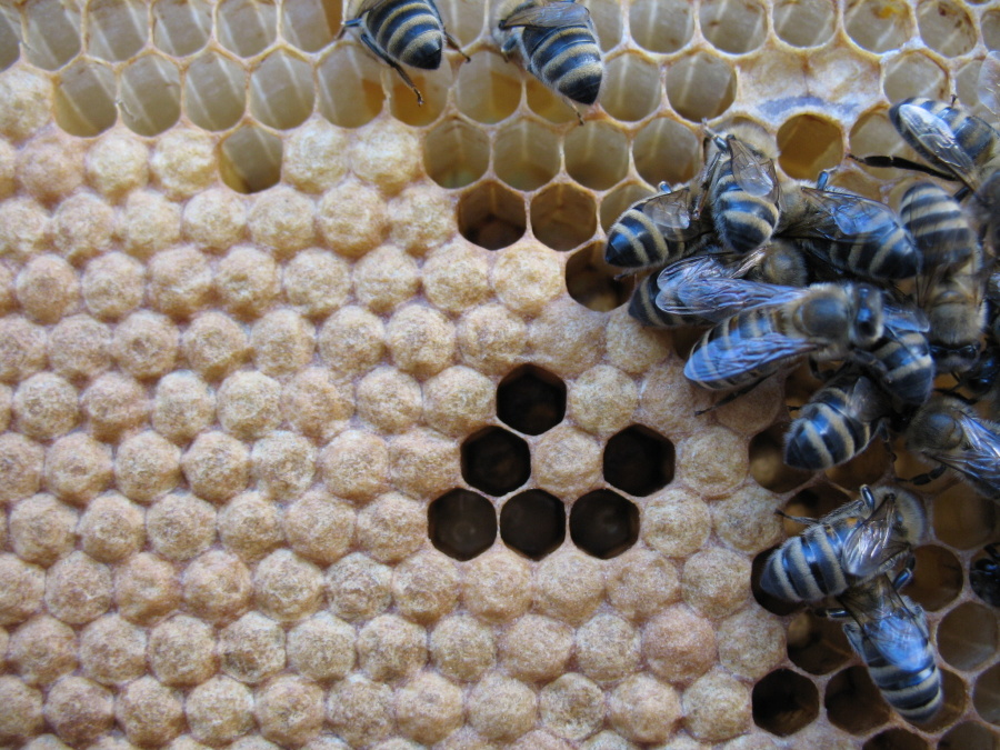 Včelári Stupava